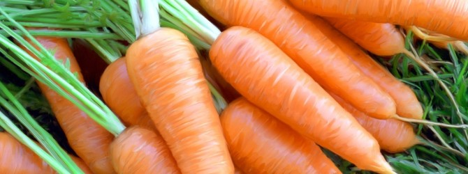 Полезные свойства столовой моркови
