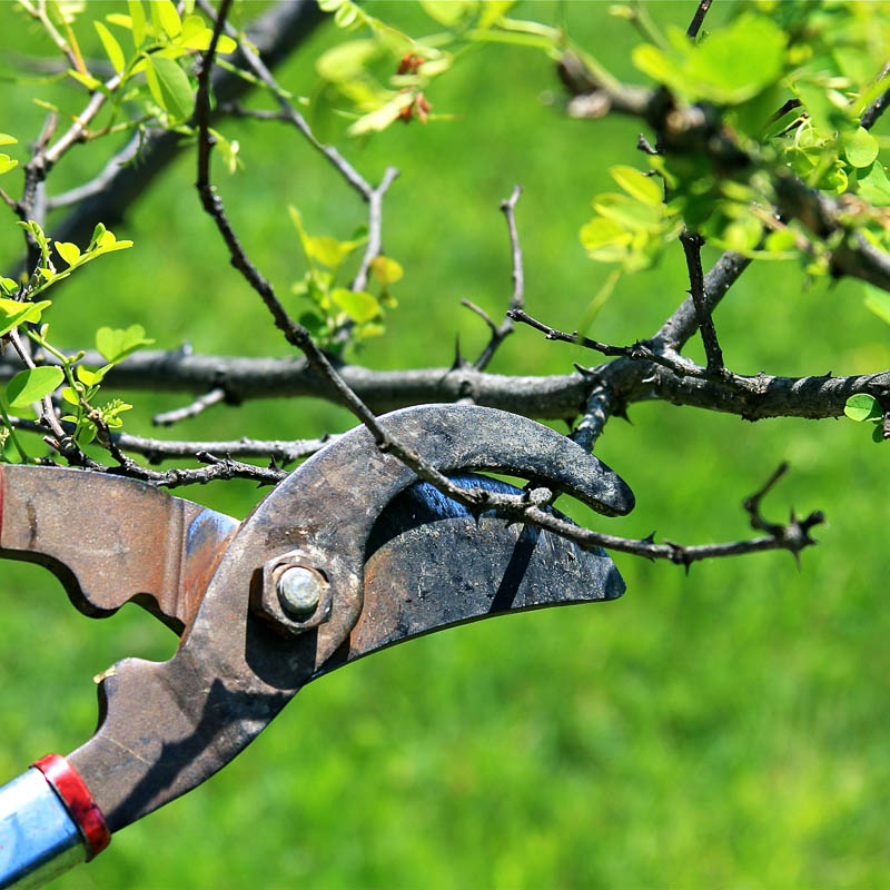 Несколько советов для выбора фруктовых деревьев
