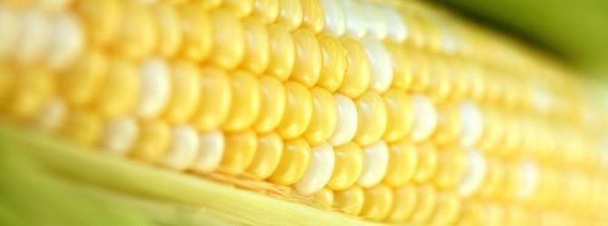 Лечебные свойства кукурузы