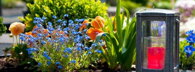 Какие цветы можно сажать в кладбище 520