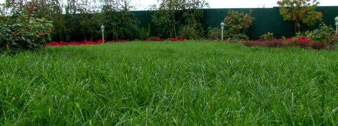 Видео 15. Уход за газоном осенью