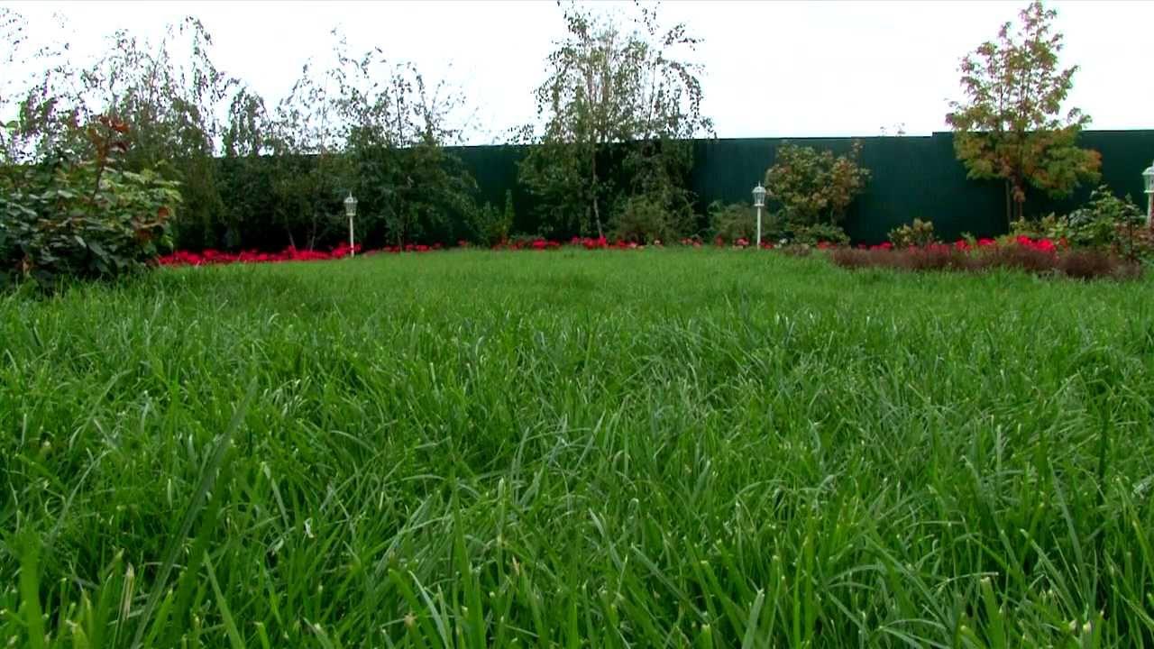 Можно ли газон сажать осенью 700