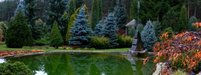 Видео 7. Хвойные растения в саду