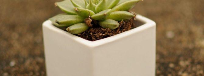 Летние проблемы комнатных растений