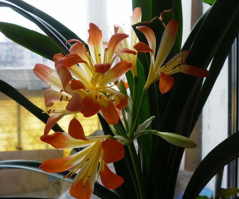Комнатные растения для северных окон