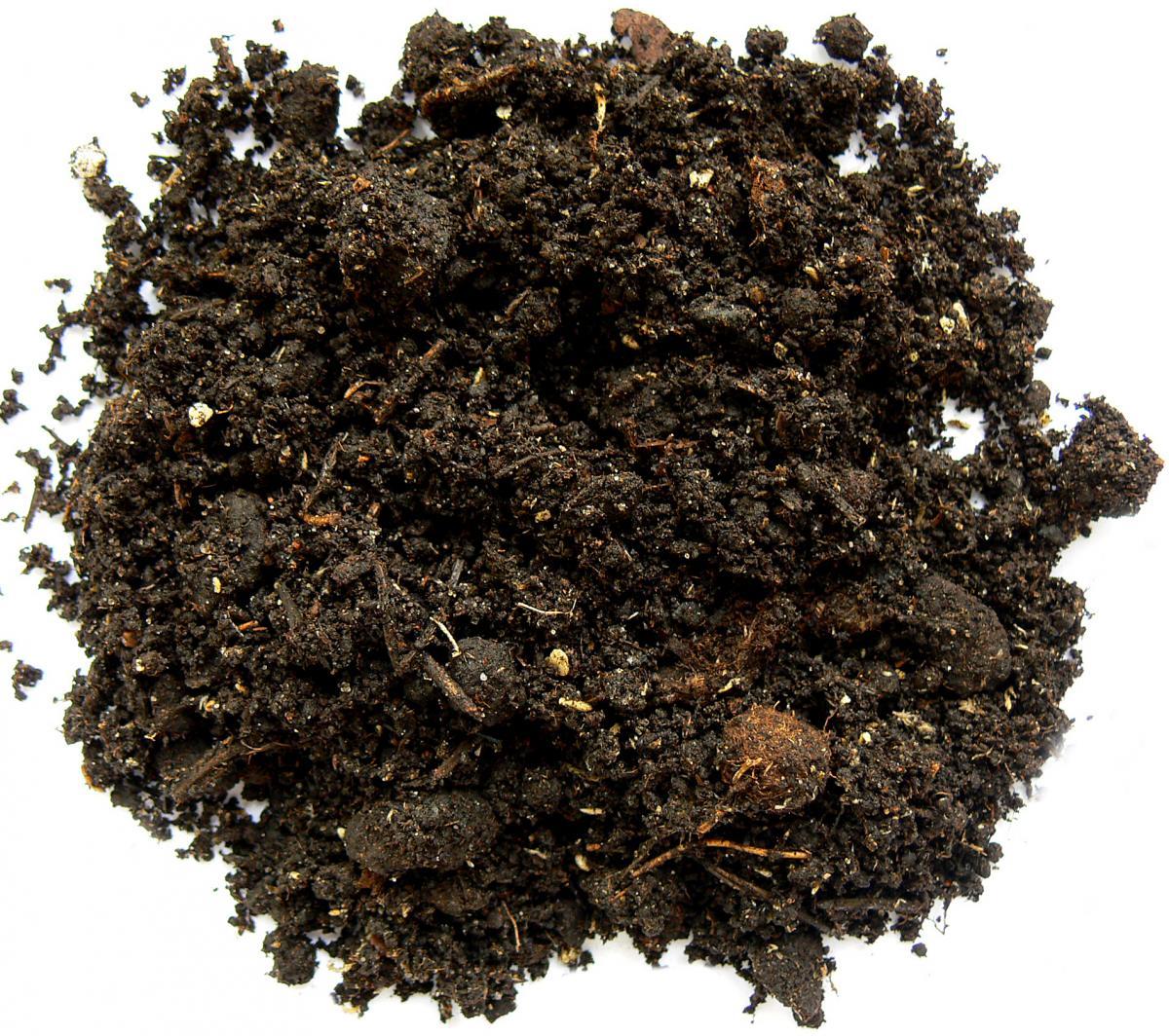 Что нужно знать о почве для растений