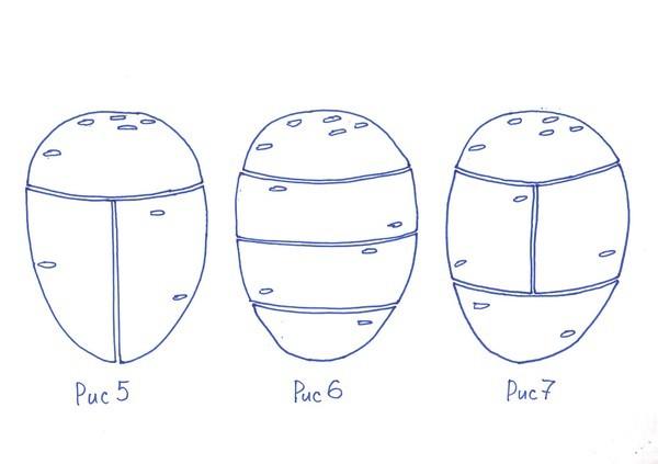 Схема разрезки клубней картошки