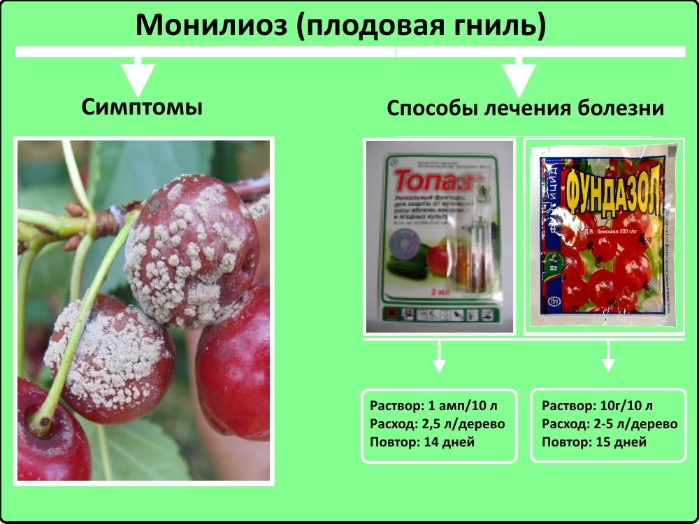Монилиоз войлочной вишни