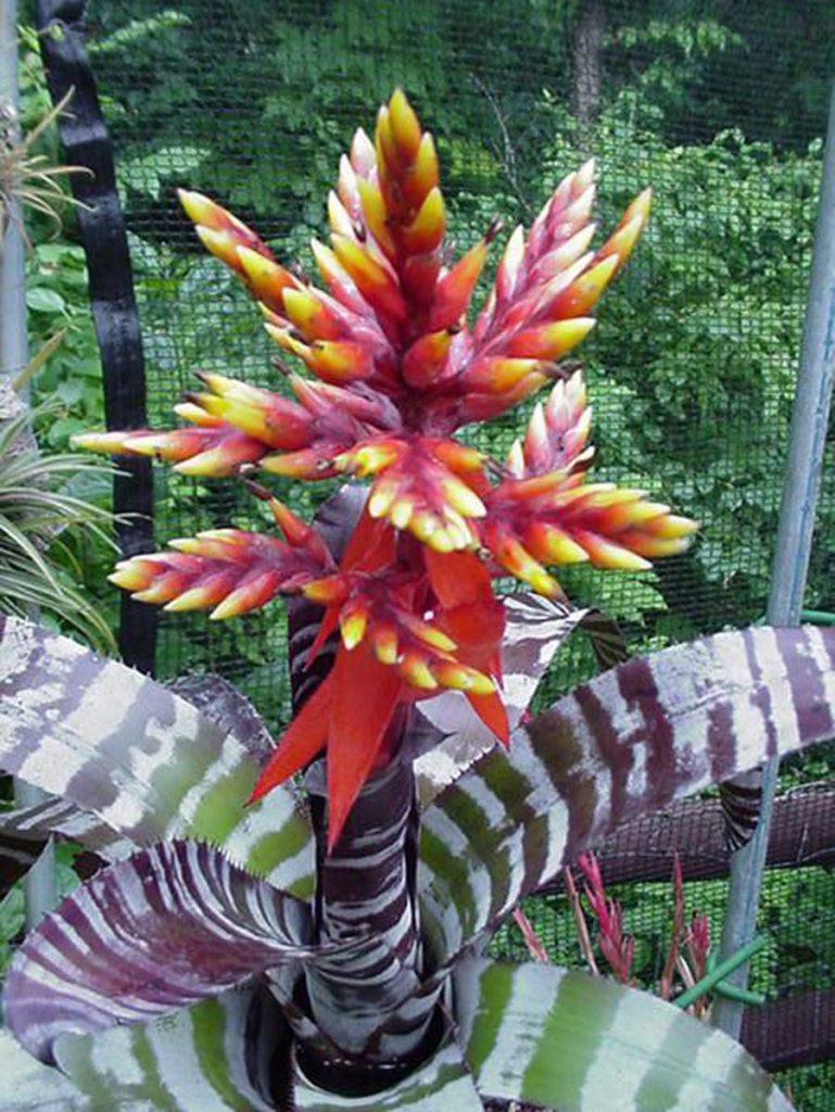 Полосатый цветок с красным цветком фото