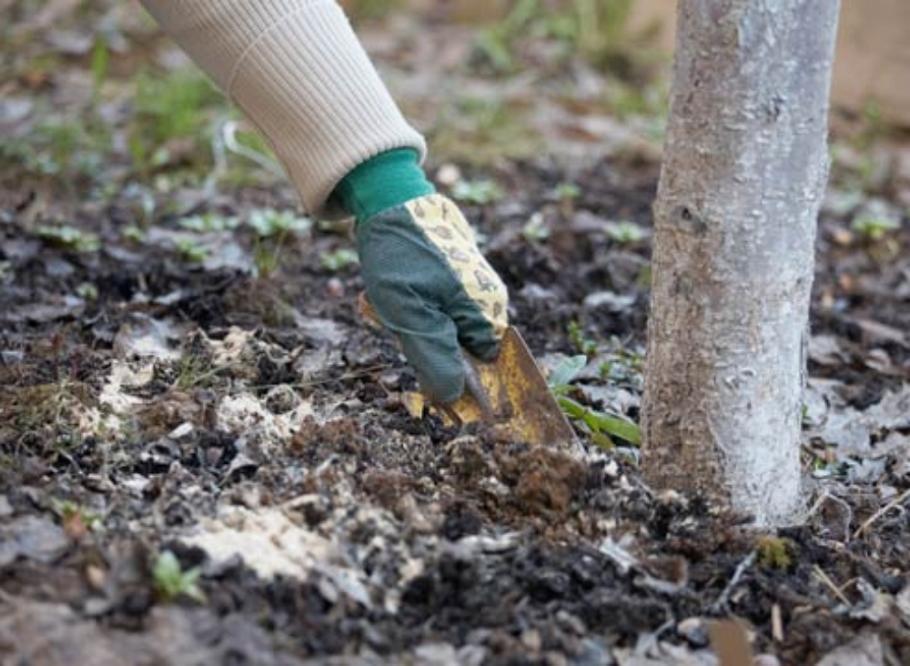 Удобрение возле ствола дерева