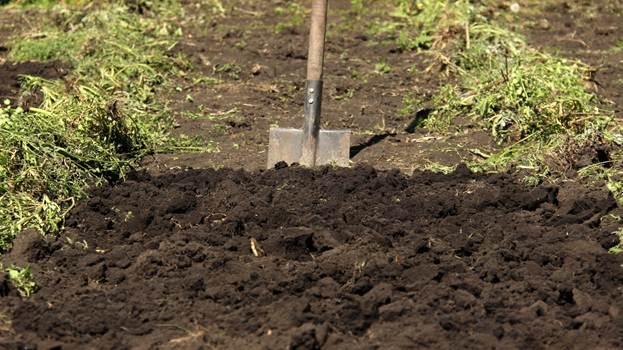 Подготовка почвы к посадке садовой земляники