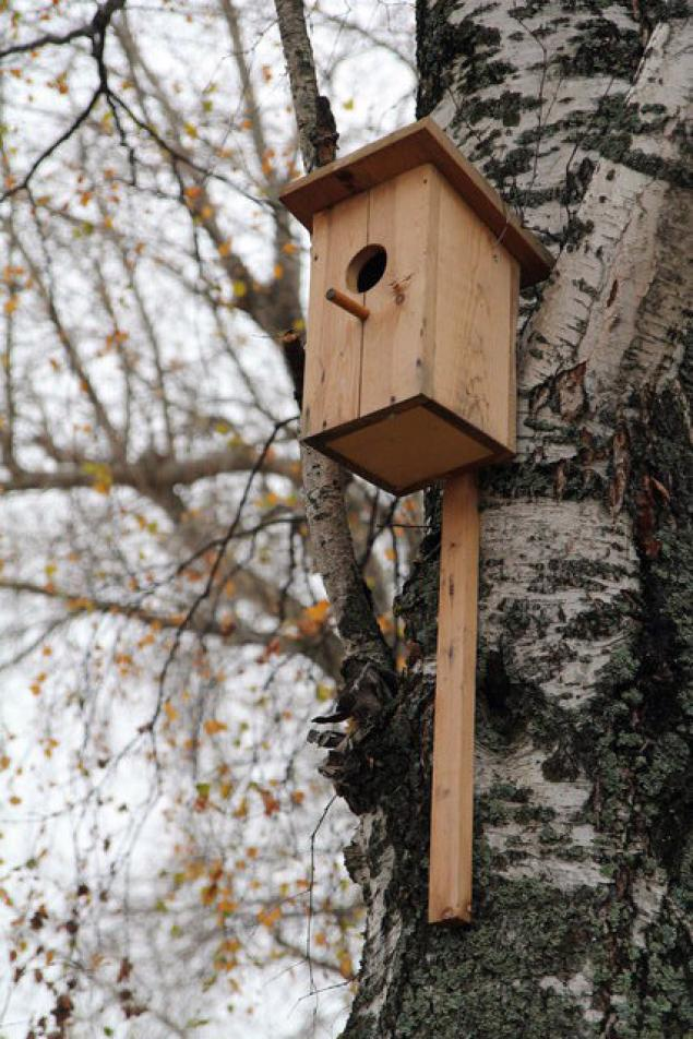 Домик для скворцов на дереве