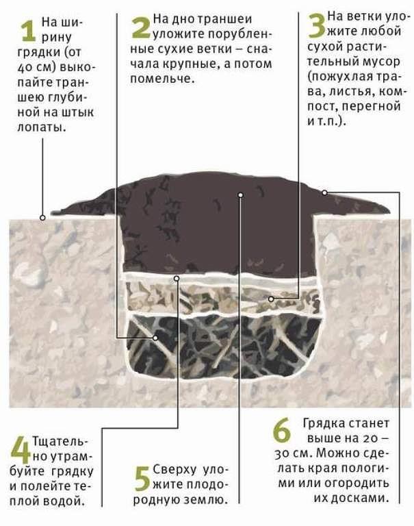 Выращивание огурцов для открытого грунта 37