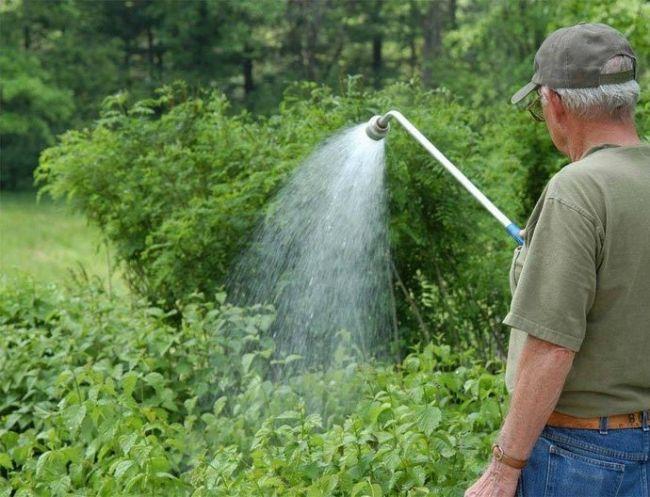 Мужчина поливает растения