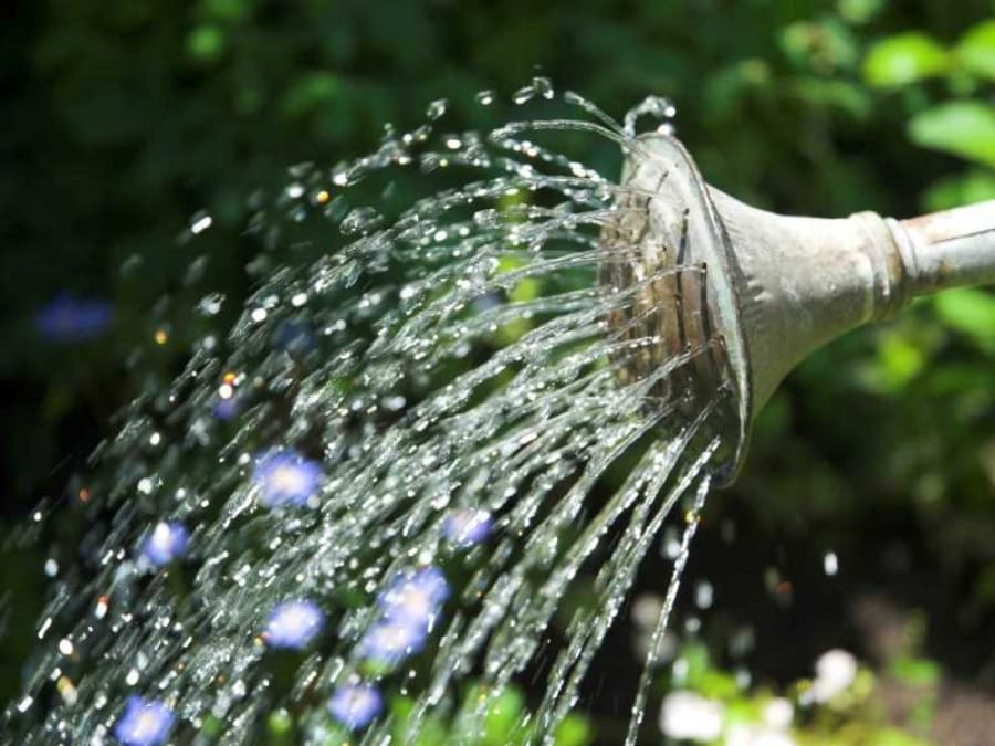 полив огурцов