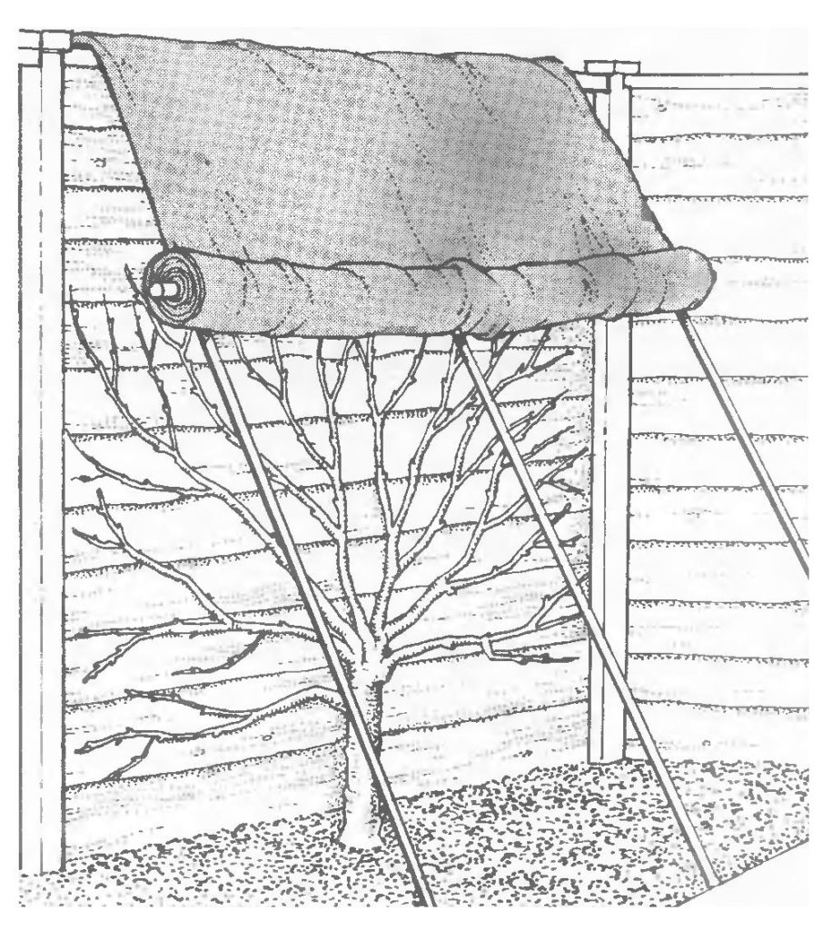 Защита дерева от заморозков