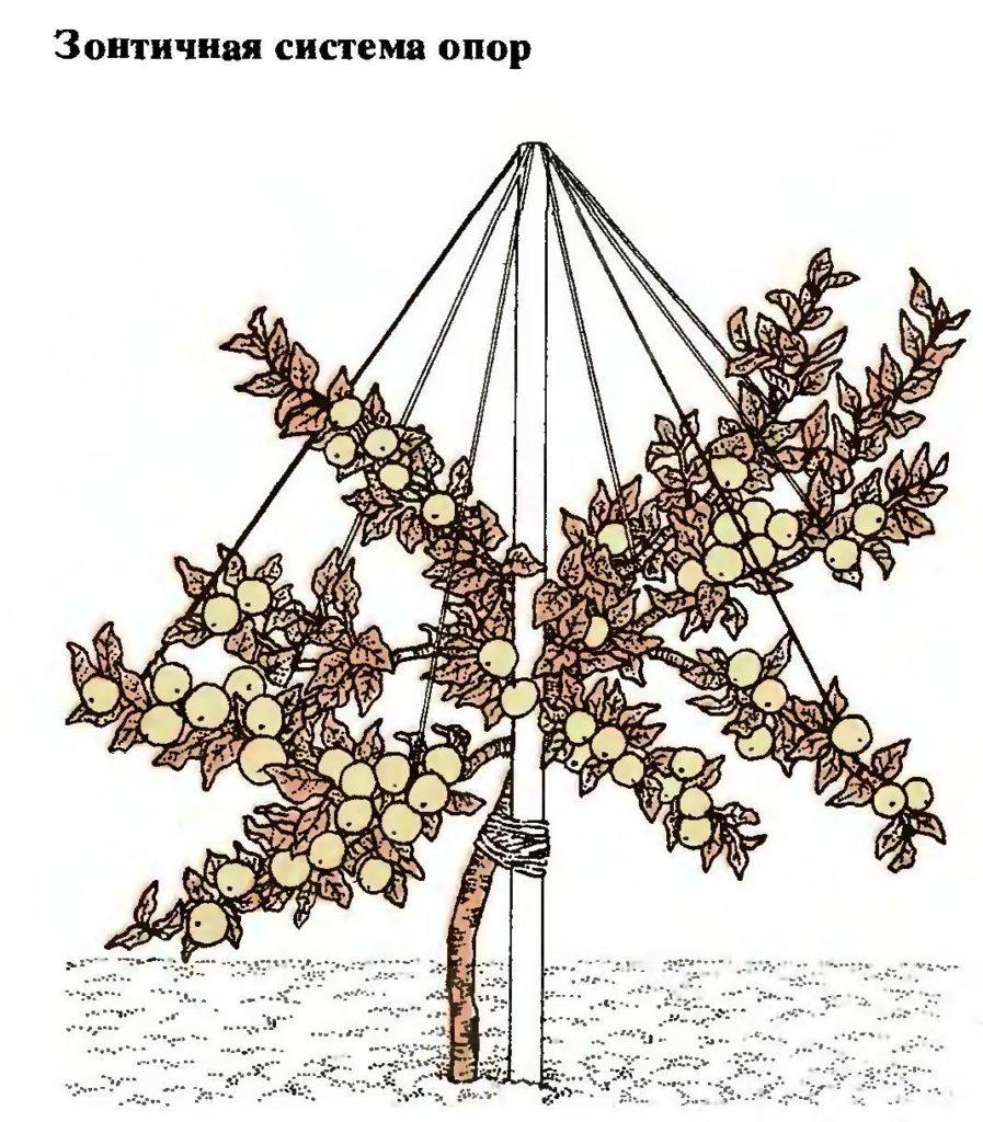 Зонтичная опора