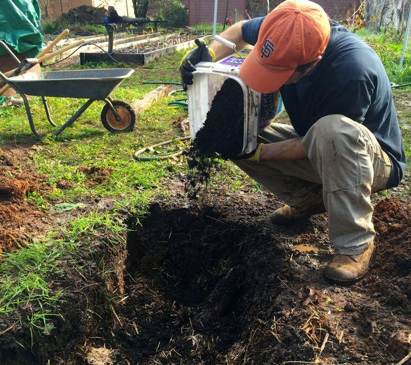Внесение удобрений в траншею для малины