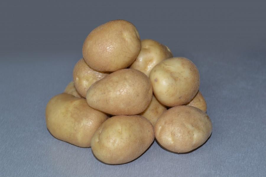 Картофель сорта Удача