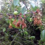 Монилиоз на ветвях