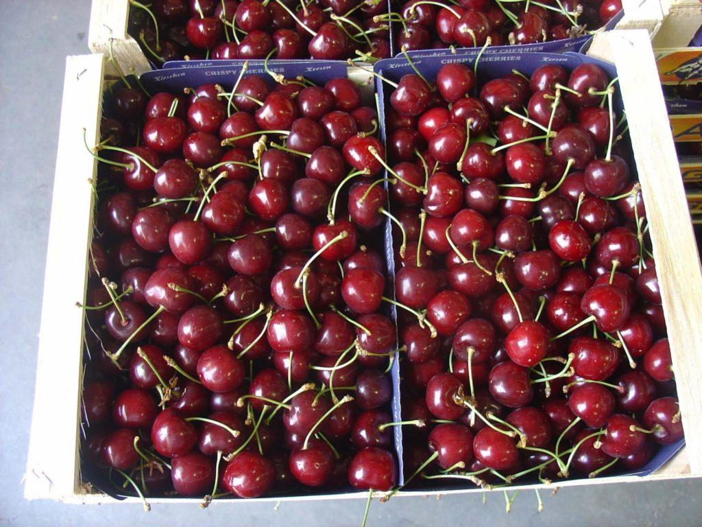 Транспотрировка сорта вишни Шпанка