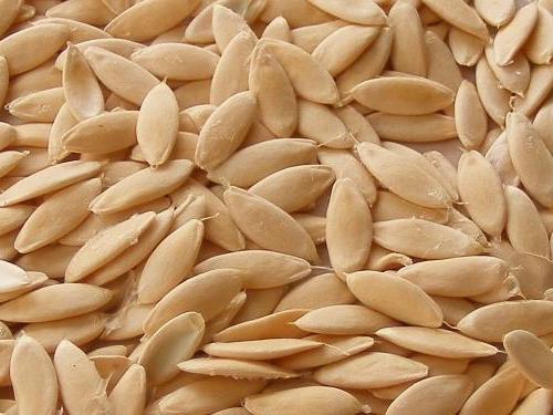 семена огурцов, собранные своими руками