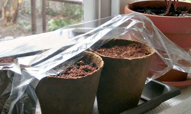 Торфяные горшочки под плёнкой
