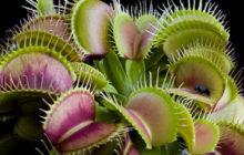 Какие бывают растения-хищники?