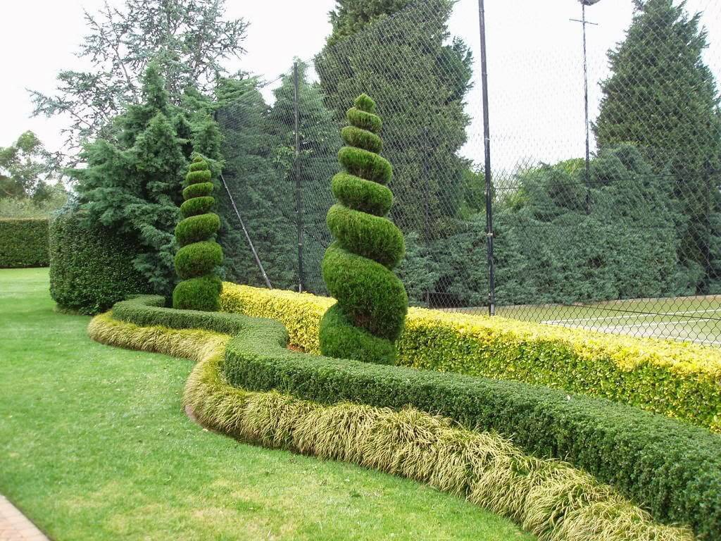 Кипарис: описание, уход и посадка, размножение, применение в саду, фото