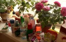 Подкормка роз, сроки подкормки