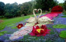 Душистые цветы для ландшафтного дизайна