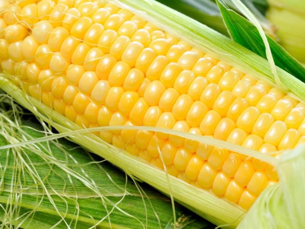 Сладкие початки кукурузы