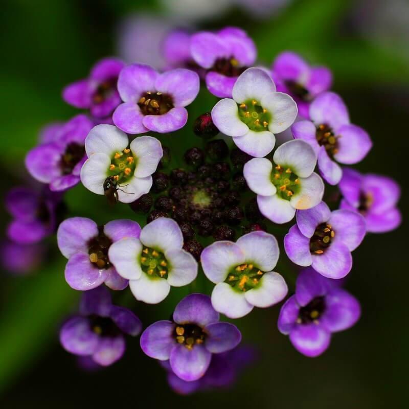 Ночные цветы для сада