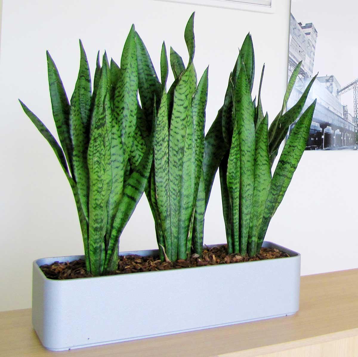 Как сохранить жизнь комнатным растениям