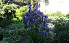 Цветы для тенистых участков
