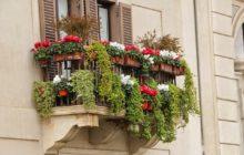 Как подобрать цветы для балкона?