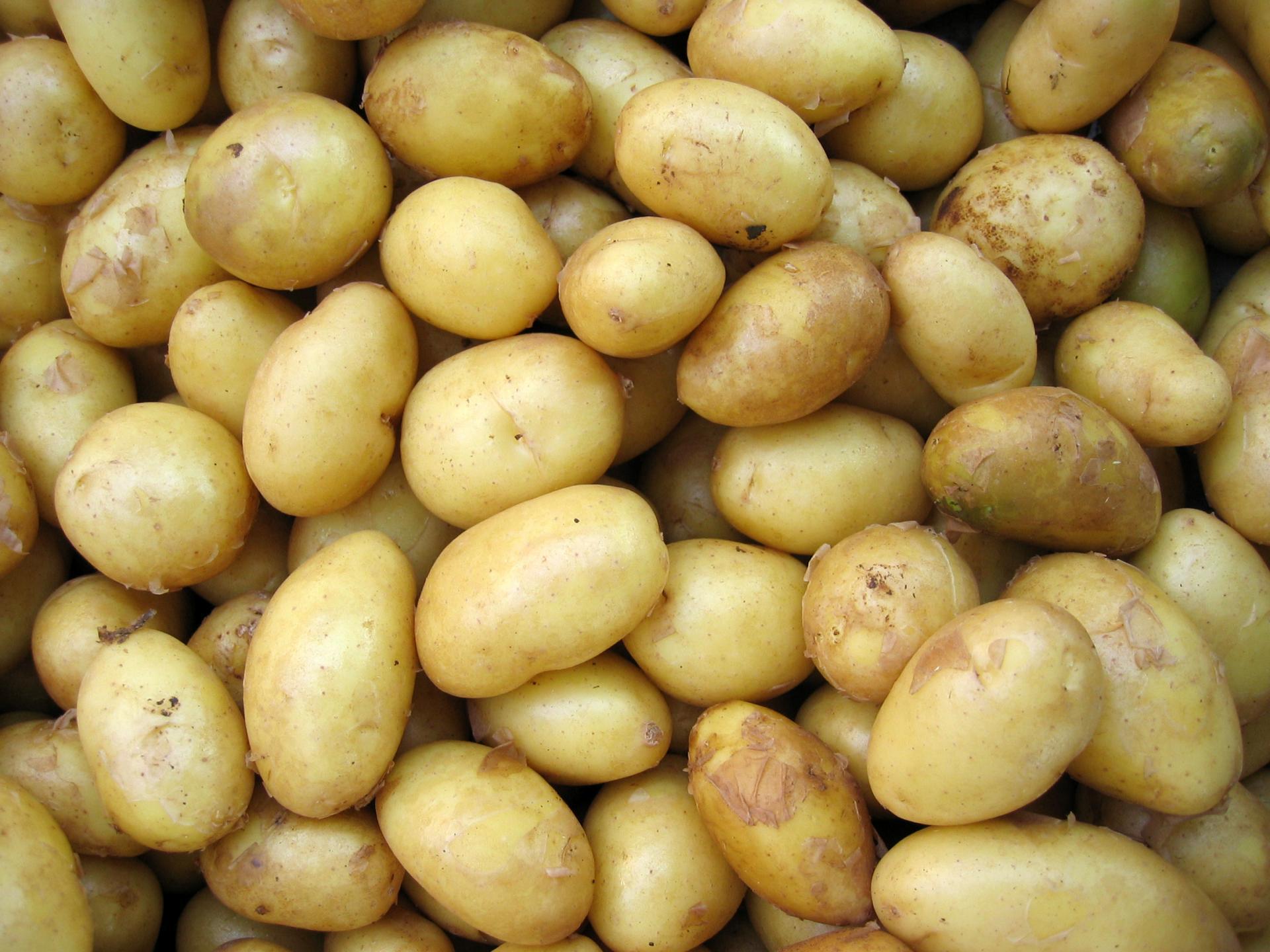Картошка Адретта