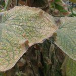 Листья в паутине
