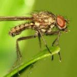 Маленькая муха на листе