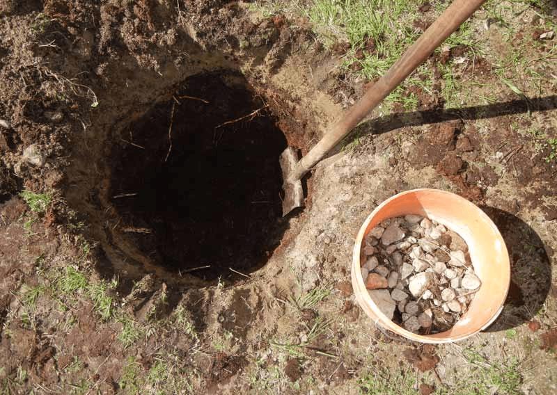 Высадка саженца в грунт
