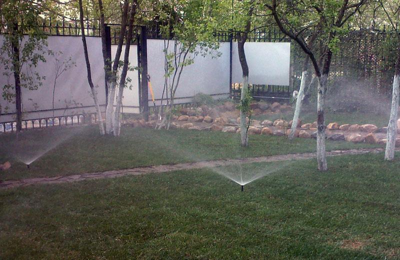 Полив сливы дождеванием