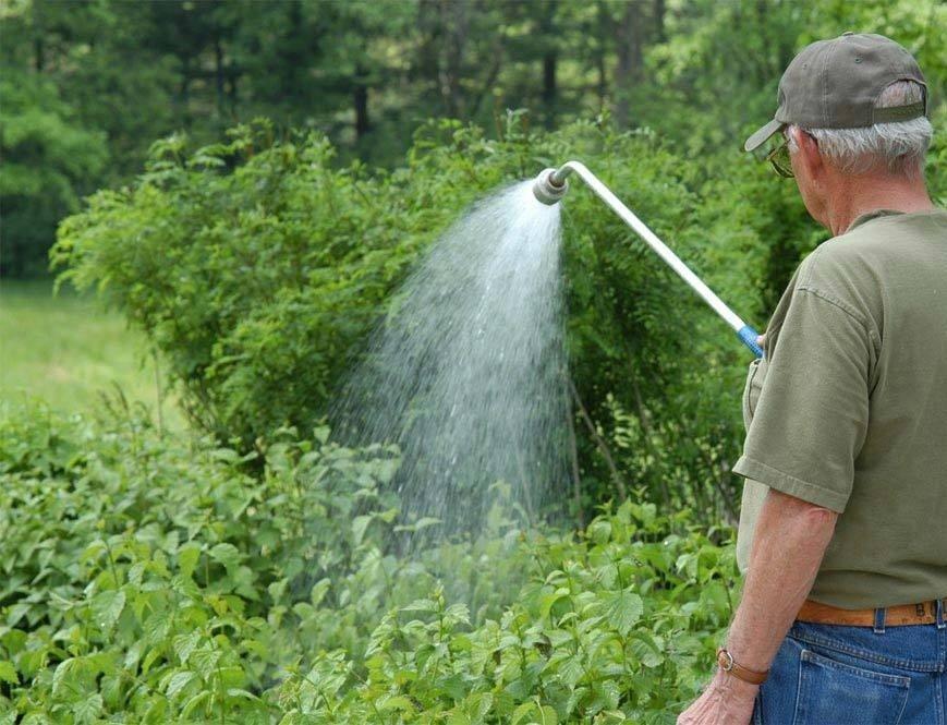 Садовник поливает малину