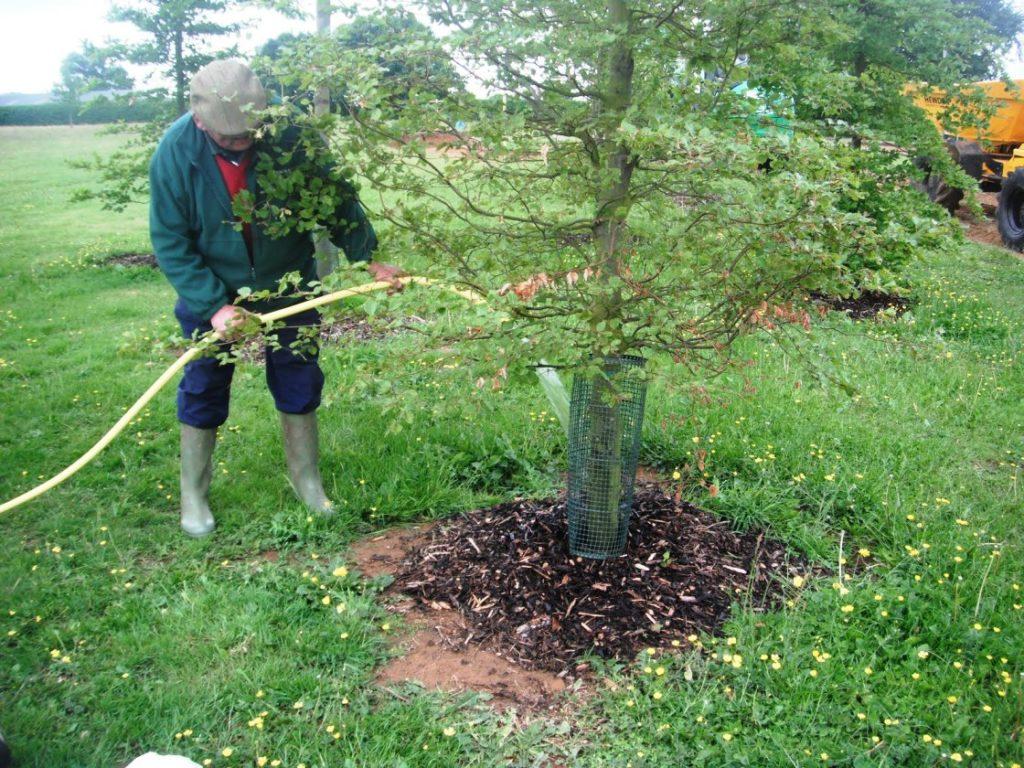 Дерево с защитной сеткой