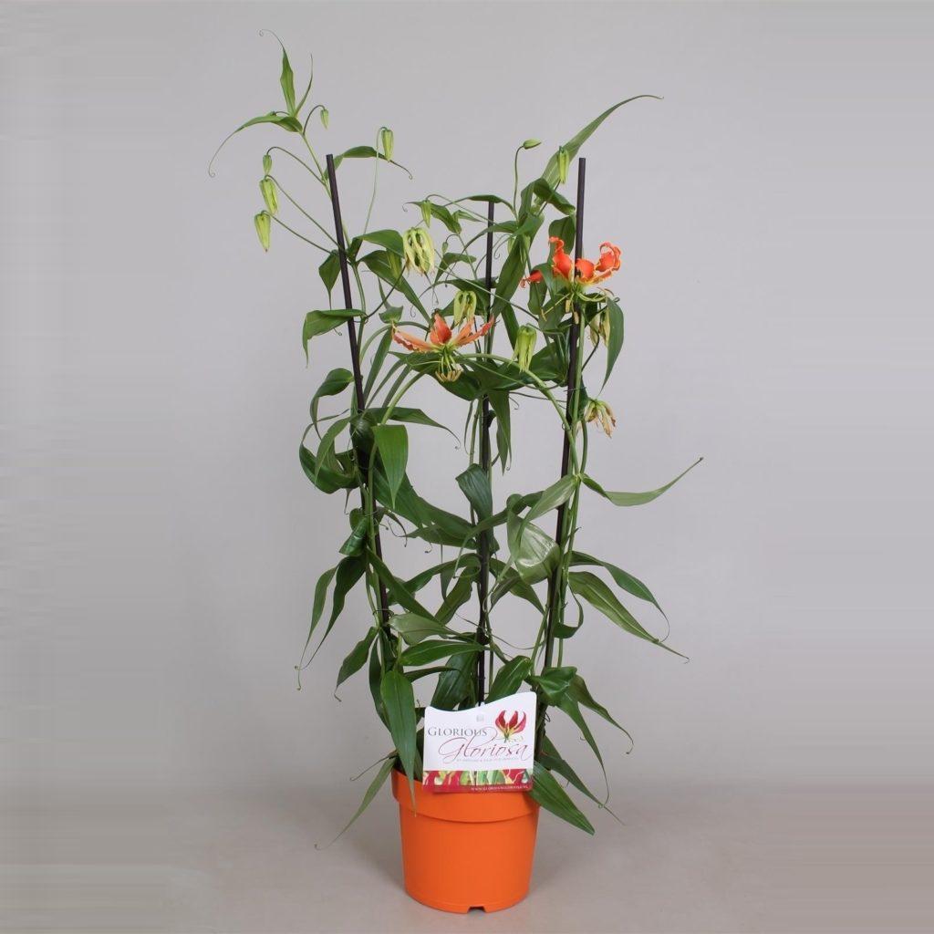 Опора для цветка