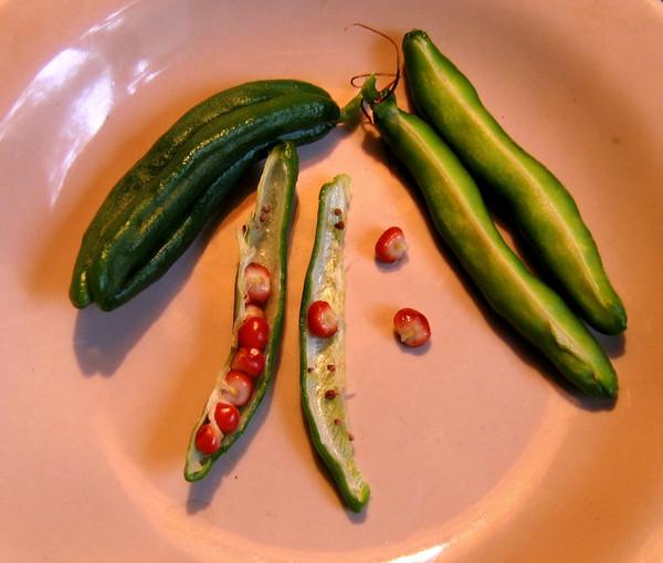 Плоды и семена глориозы