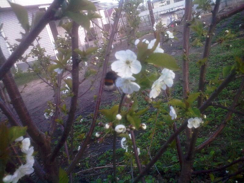 Цветёт Ипуть
