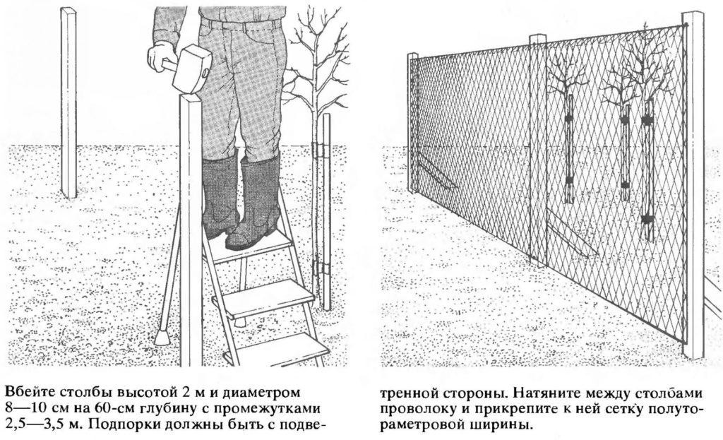 Защита дерева от ветра