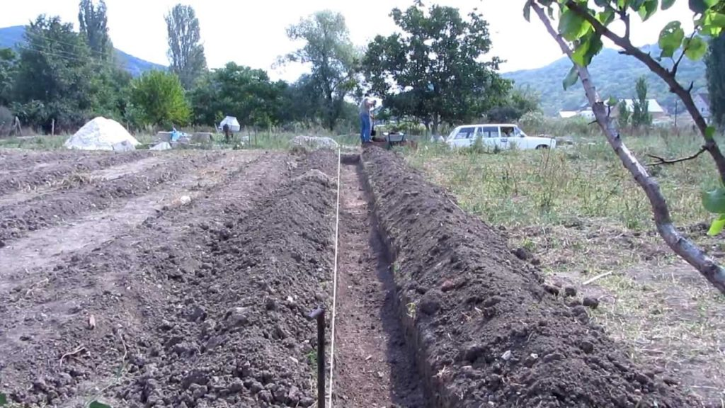 Подготовка участка для малинника