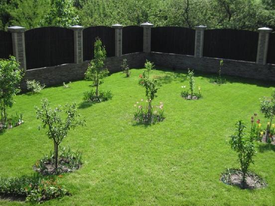 Саженцы сливы в саду
