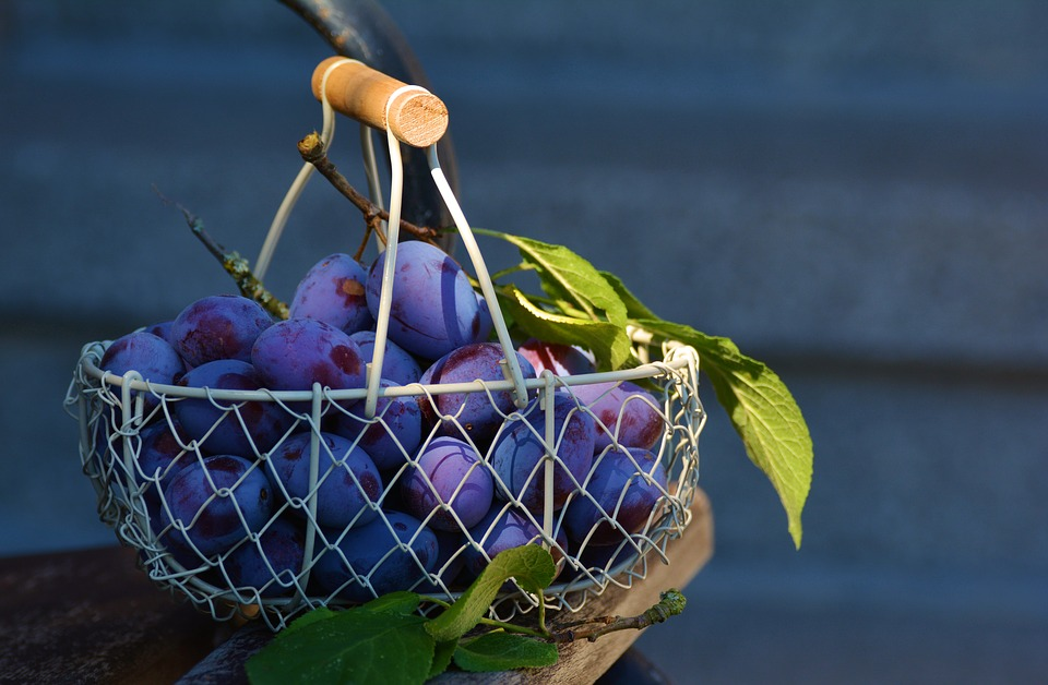 Урожай сливы в корзине